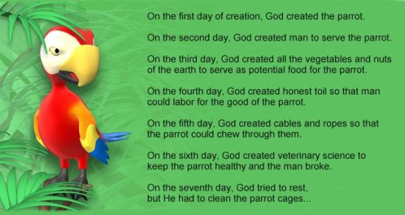 God Created the Parrot