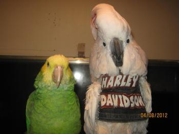 Tammy Hollinger Birdie Vest