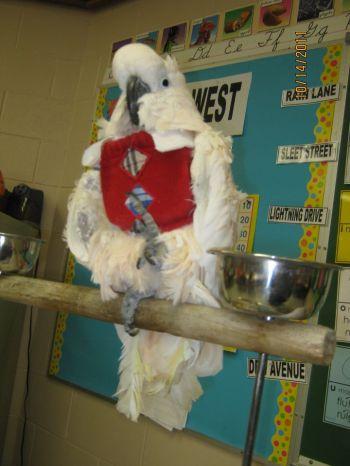 Tammy Hollinger Birdie Vests