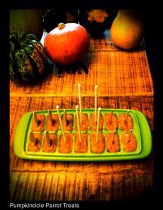 Pumpkin Parrot Treats