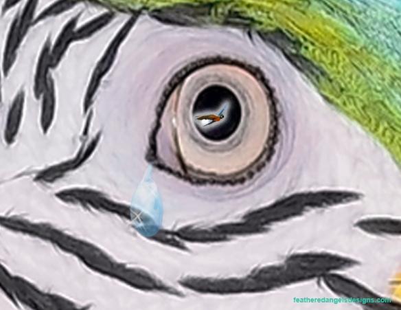 Macaw tear