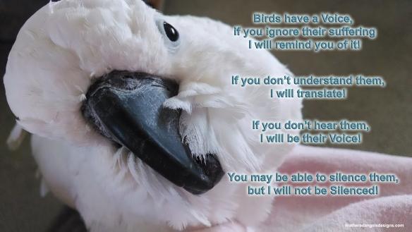 Birds have a voice