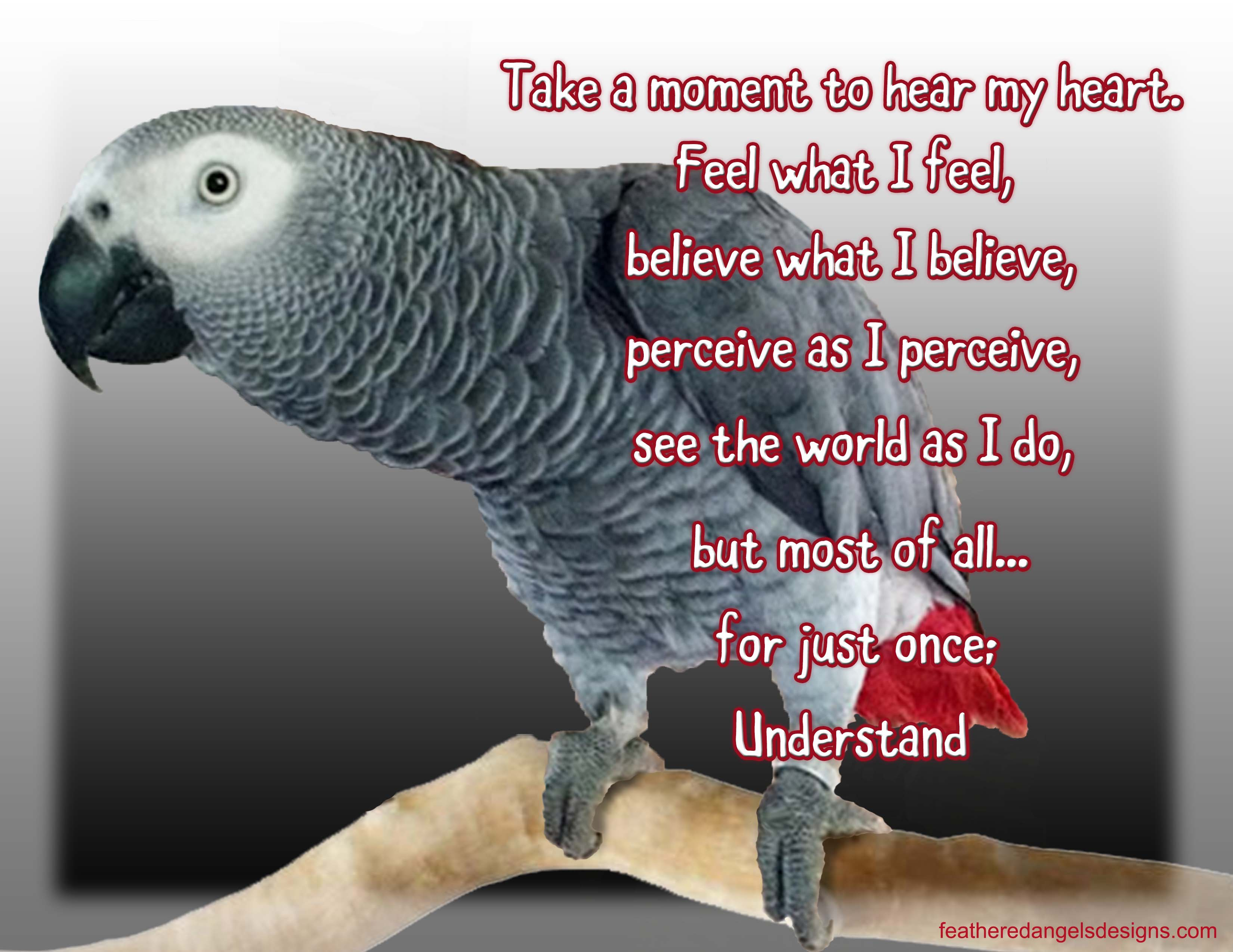 Parrot Quotes Feathered Angels
