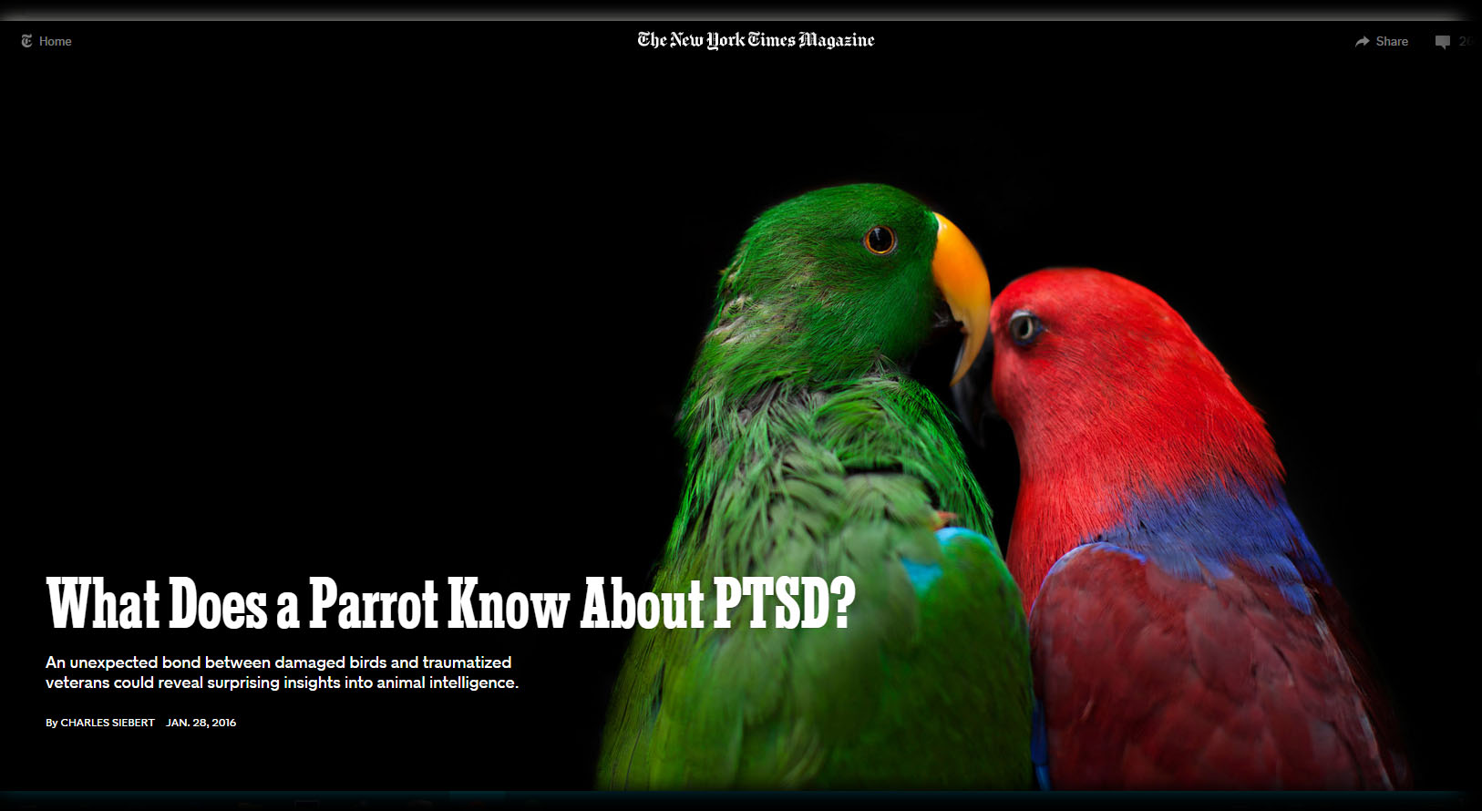 Love Bird Quotes Parrot Quotes  Feathered Angels